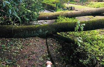 Trami (typhoon No.24)