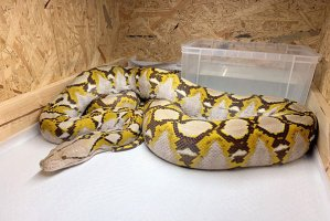 pet-python.jpg