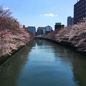 Sakura 2017