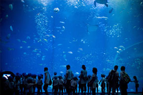 aqua-world.jpg